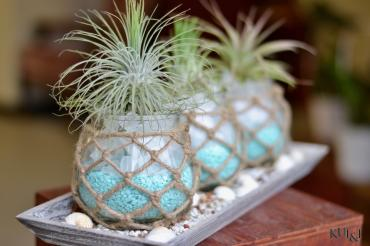 Air Plant Centerpiece 6