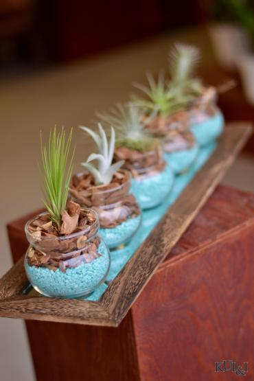 Air Plant Centerpiece 4